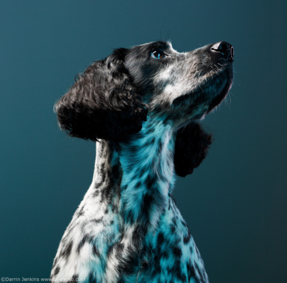 Milley the dog photographed in the studio